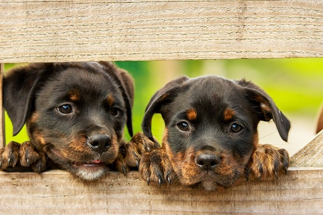 hundepensionen