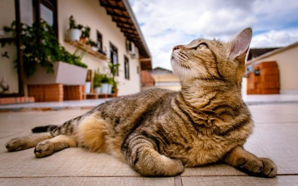 kosten-katzenpension