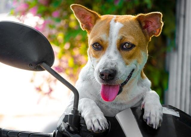 urlaubsbetreuung hund