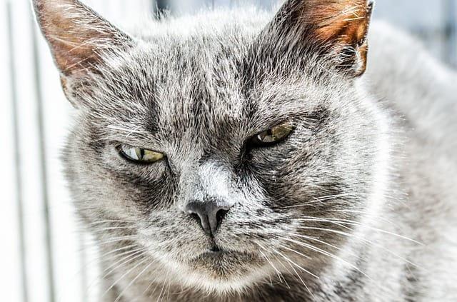 tollwut katze impfung