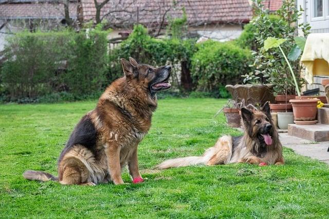 hundetagesstätte-betreuung