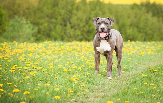 urlaub betreuung hund