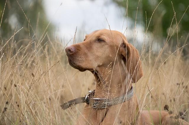 zeckenschutz hundehalsband