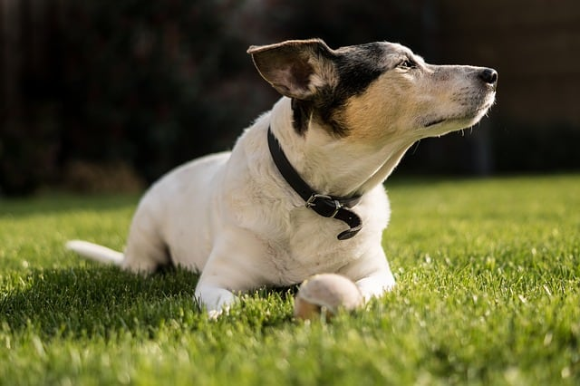 hundepension