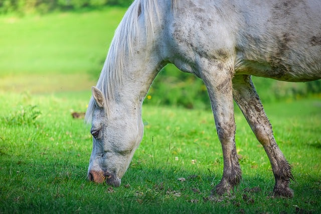 was kostet ein pferd