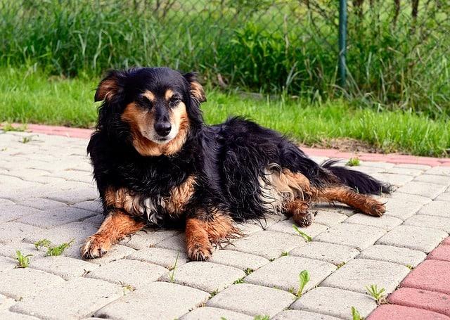 wurmkur hund
