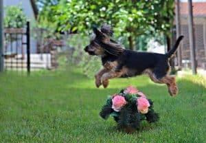 hundeschule hundeerziehung