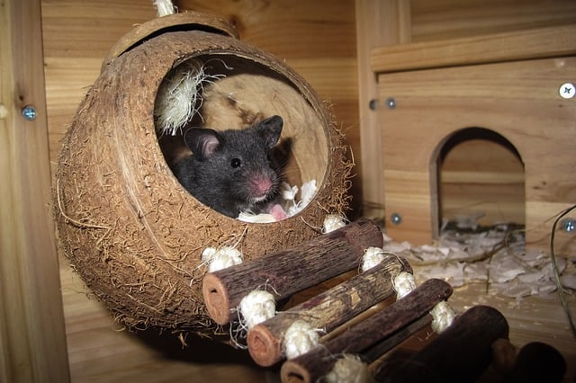 Hamster anschaffung