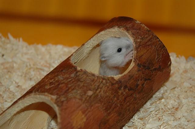 Hamsterinnenausstattung Kosten