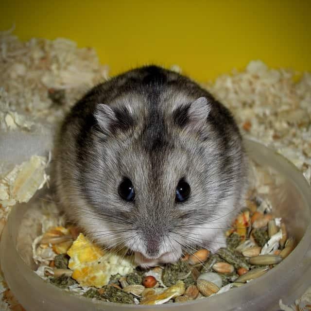 Hamsterfutter kosten