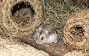 hamster urlaub
