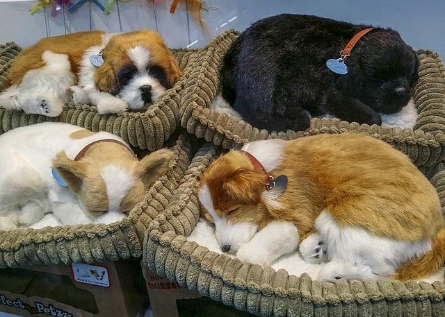 Hundebett mit Welpen