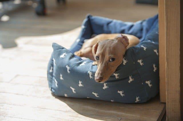 Hundehöhle Wohnzimmer