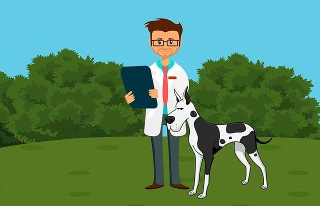 Haustierversicherung Doc mit Hund