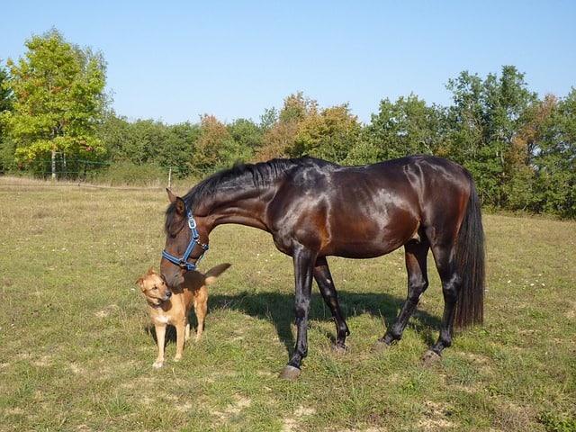 Pferd & Hund