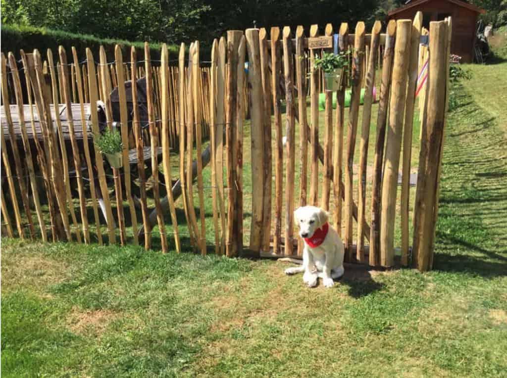 hund von einem staketenzaun